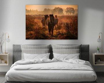 konik paarden van bryan van willigen