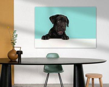 Porträt eines schwarzen Labrador-Retriever-Welpen, der niedlich aussieht und etwas vor einem blauen  von Elles Rijsdijk