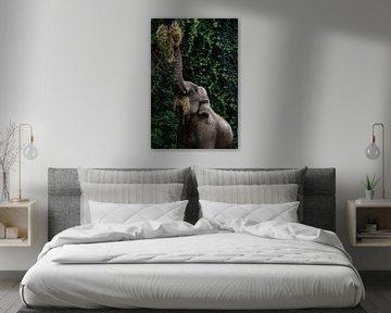 Elefant von Evi Willemsen
