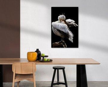 Pelikan von Evi Willemsen