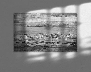 Seemöwen am Strand von Hanneke Bantje