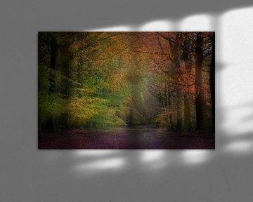 Herbst in Drenthe von Dirk-Jan Steehouwer