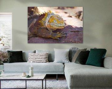 Gelber Leguan von Hanneke Bantje