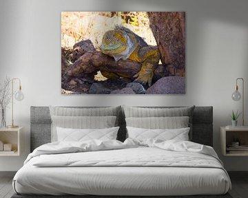 Leguan auf Ast von Hanneke Bantje