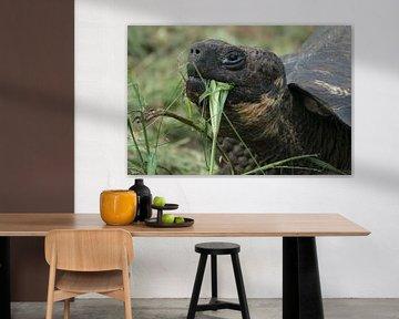 Riesenschildkröte von Hanneke Bantje