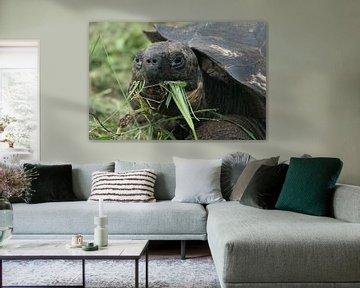 Fressende Riesenschildkröte von Hanneke Bantje