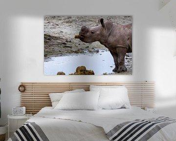 Baby-Nashorn isst leckeren Snack von Arnold van der Horst
