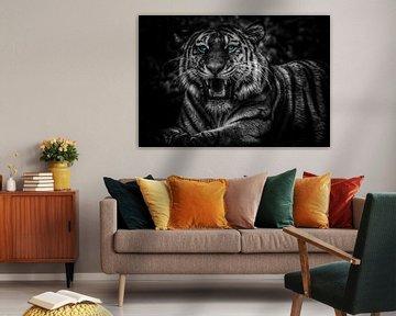 The eyes of a tiger van Bert Hooijer