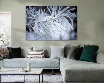 winter rijp in het bos van Karijn   Fine art Natuur en Reis Fotografie
