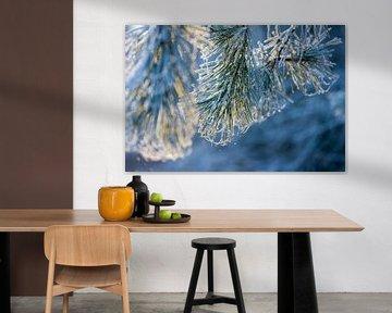 kerstposter met dennenaalden van Karijn   Fine art Natuur en Reis Fotografie