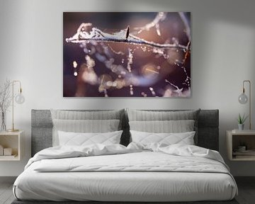 spinnenrag met winter rijp van Karijn   Fine art Natuur en Reis Fotografie
