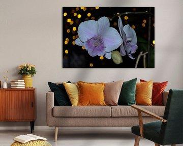 Orchidee (1) von Rob Burgwal