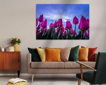 Tulpen in der Luft von Dennis Donders