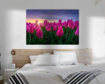 Sonnenaufgang und die blühenden Tulpen von Dennis Donders