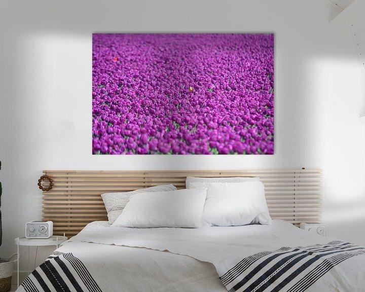 Sfeerimpressie: Paarse tulpen van JTravel