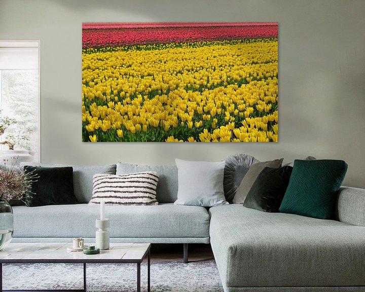 Beispiel: Tulipfield von JTravel
