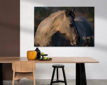 Konik Pferd von Evi Willemsen