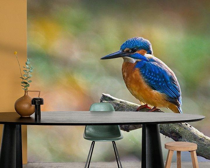 Beispiel fototapete: Farbenfroher Eisvogel von Dirk-Jan Steehouwer