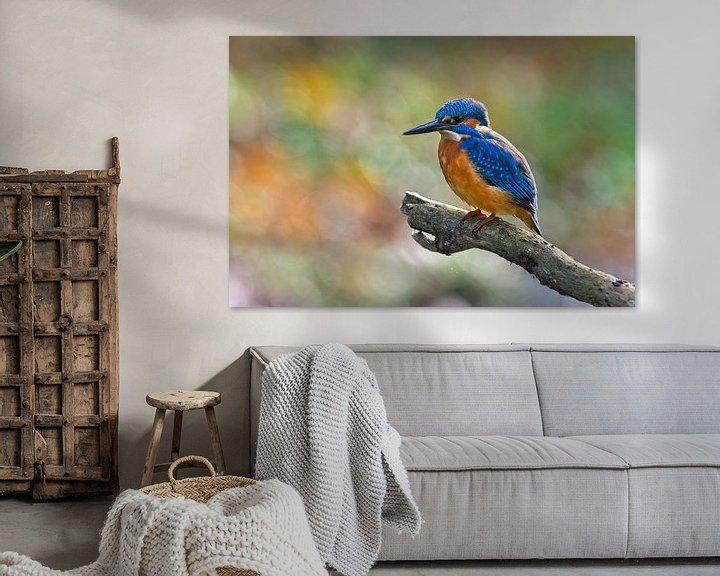 Beispiel: Farbenfroher Eisvogel von Dirk-Jan Steehouwer
