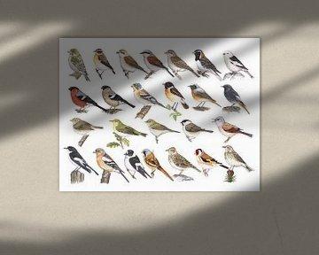 Singvögel der Niederlande von Jasper de Ruiter