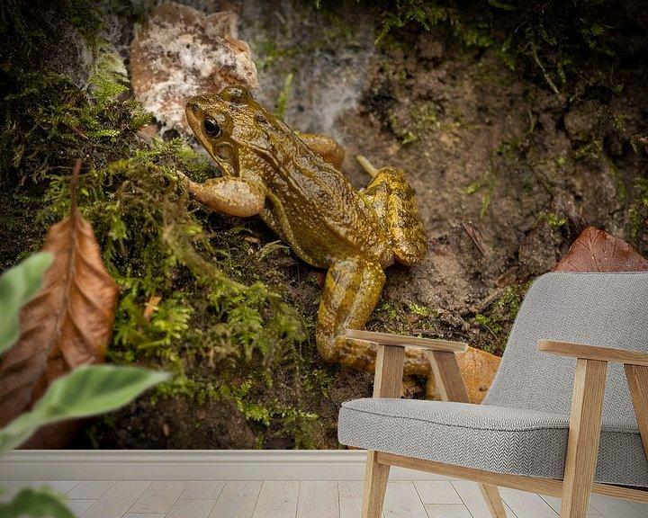 Sfeerimpressie behang: Kikker in het bos van Visueelconcept