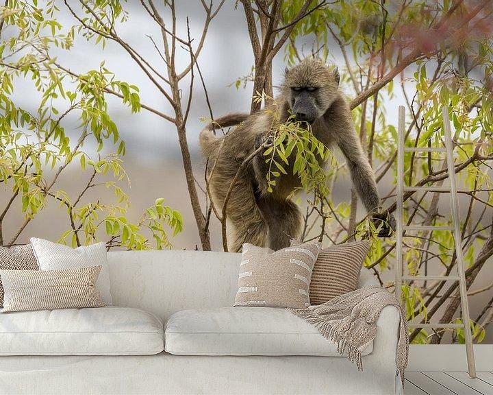 Sfeerimpressie behang: Baviaan in het Kruger National Park van Visueelconcept
