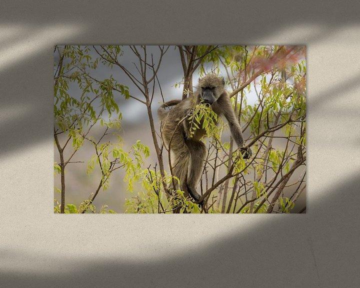 Sfeerimpressie: Baviaan in het Kruger National Park van Visueelconcept