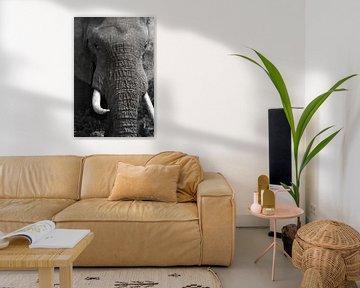 Elefant Nahaufnahme schwarz und weiß von Discover Dutch Nature