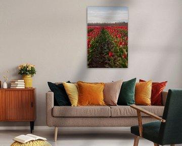 Tulpenfeld von t.ART