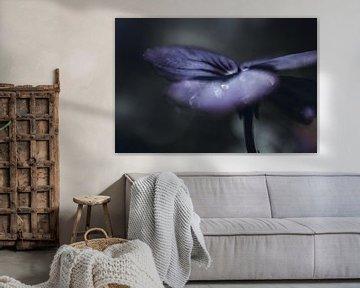Dunkelviolett (Blüte) mit Tropfen von KB Design & Photography (Karen Brouwer)