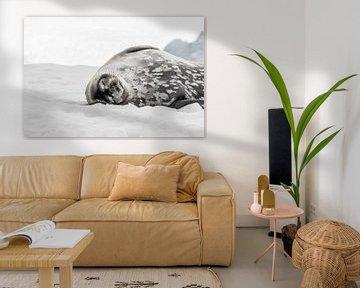 Zeehond op Antartica van Farewell to the world