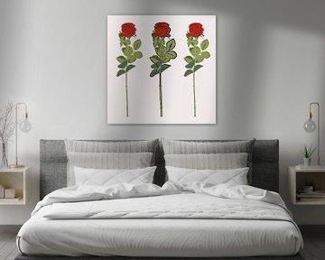Rosen von Robbin Bijl