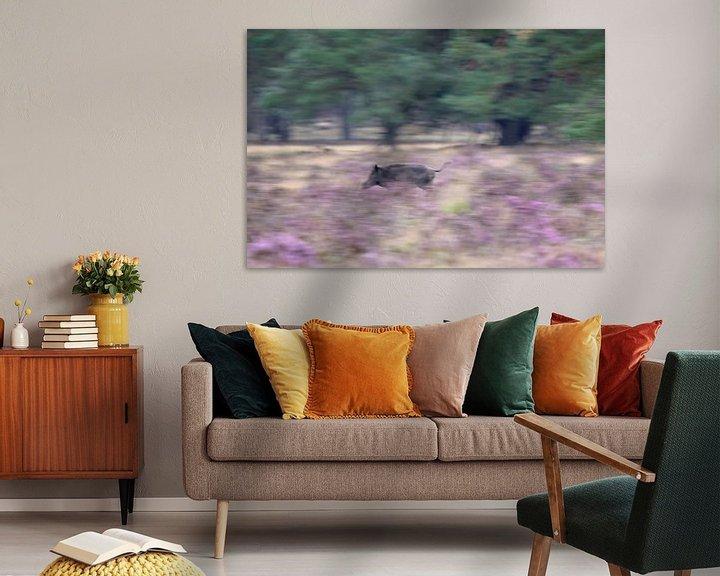 Beispiel: Wildschwein läuft durch die lila Moore von Barbara Brolsma