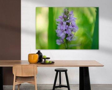 Wilde Orchidee von Barbara Brolsma