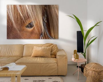 Nahaufnahme des Auges eines braunen Pferdes von Hilda Weges