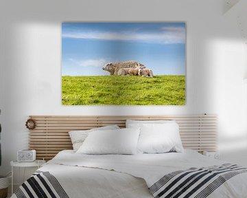 Schafsfamilie beim Ausruhen auf einem Deich an der Küste von Hilda Weges