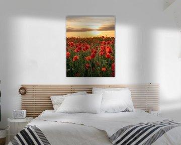 Sonnenuntergang über den Mohnblumen von visitlimburg