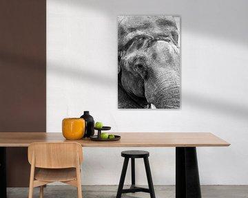 Elefantenkopf Nahaufnahme von Roel Bergsma