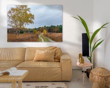 Heideveld met witte berk in herfstkleuren