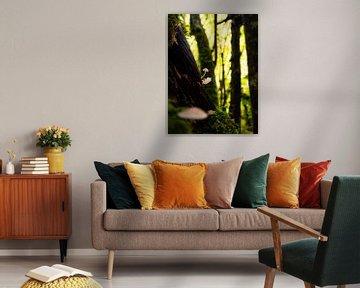 Pilze in den Wäldern von Zagori, Griechenland von Teun Janssen