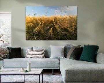 Grain fin sur Arthur de Groot