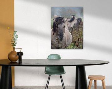 Konik-Pferde in freier Wildbahn [Pastell, Porträt]. von BHotography