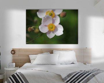 Blüte von Thomas Jäger