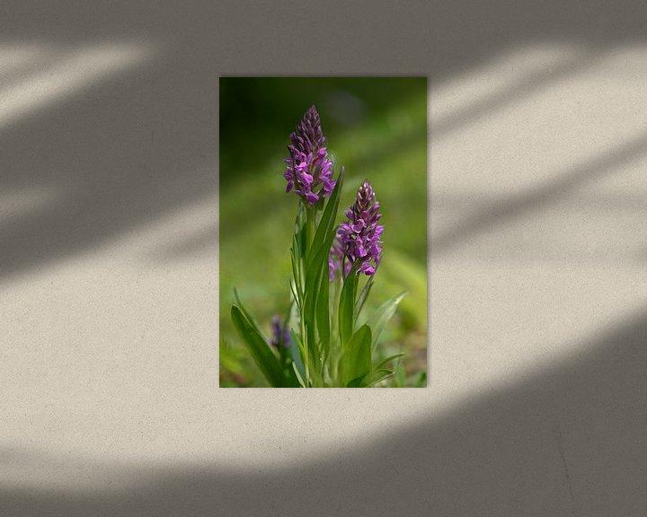 Sfeerimpressie: Orchidee van Bernhard Kaiser