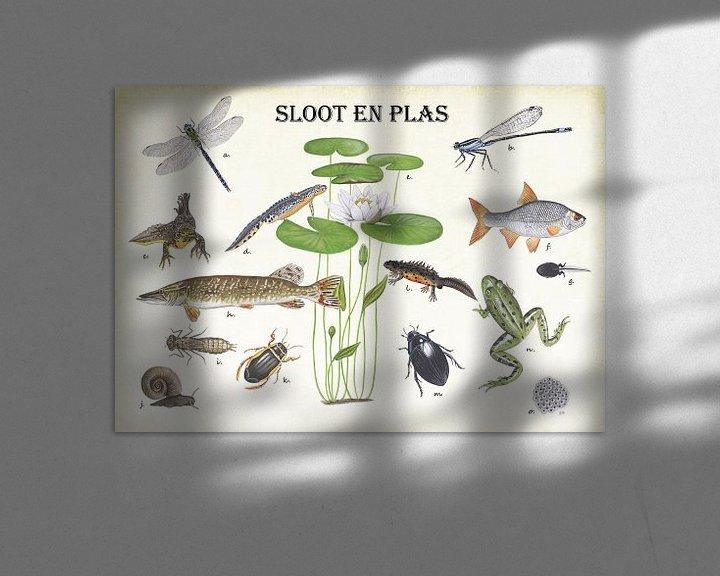 Beispiel: Pflanzen, Tiere und Fische von Gräben und Teichen von Jasper de Ruiter