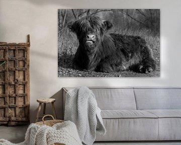 Schotse Hooglander in zwart-wit van Foto Amsterdam / Peter Bartelings