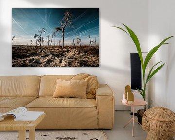 Hohes Venn in Farbe - 2 von Edwin van Wijk