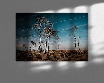 Hohes Venn in Farbe - 3 von Edwin van Wijk