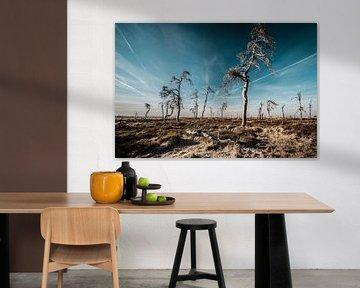 Hohes Venn in Farbe - 4 von Edwin van Wijk