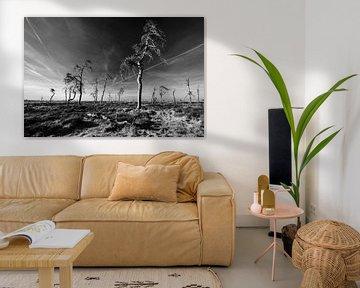 Hohes Venn in Schwarz und Weiß - 4 von Edwin van Wijk